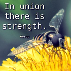 Aesop-In-union-there-is-strength