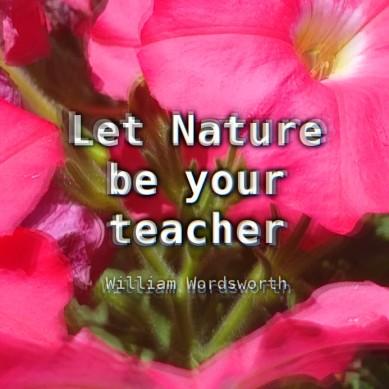 """Let Nature be your teacher"" ~ William Wordsworth"