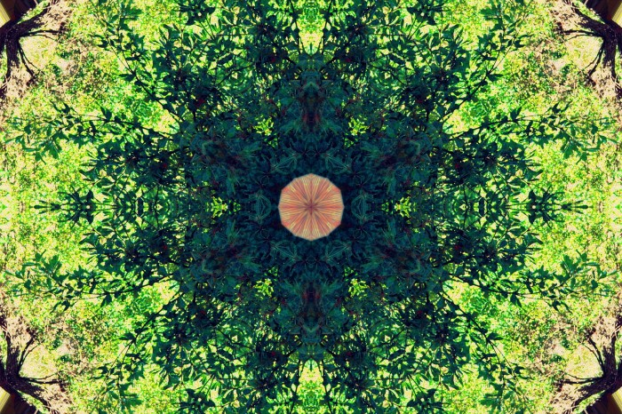 """Fractal Tree Mandala"" by Amecylia"